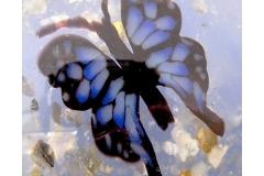 butterfly (2007)